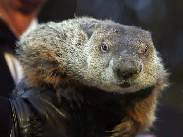 The handlers for groundhog Punxsutawney Phil say he´s forecasting six more weeks of what already has felt like a brutally long and cold winter.