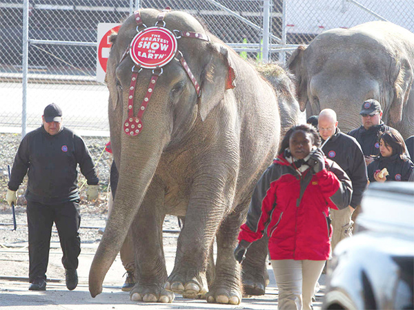 Elephants with the Ringling Bros. and Barnum & Bailey Circus march to the Wells Fargo Center last year. Cold weather will keep circus animals off the city streets this week.
