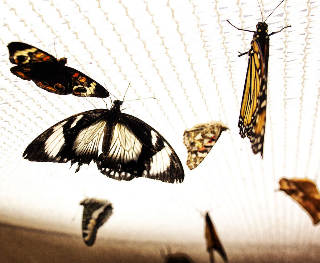The butterflies in Room 202 clinging to nets on the ceiling drew attention away from the plants - and there was little information on the importance of attracting pollinators.