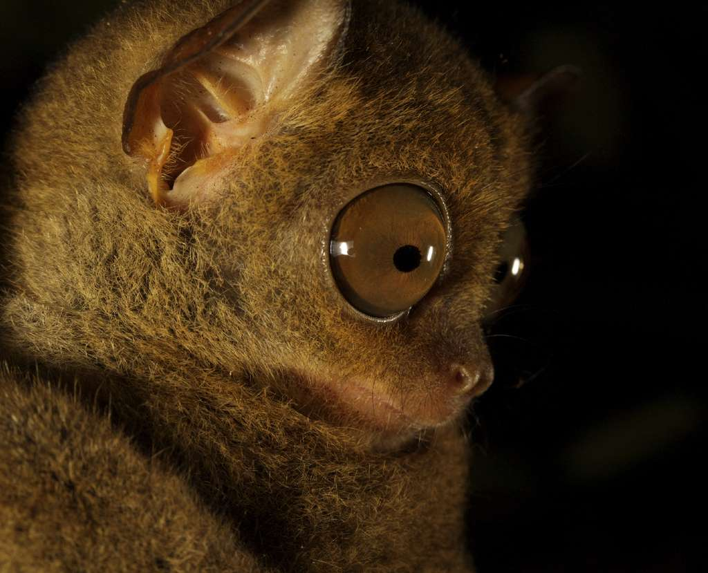 "A nocturnal tarsier hunts in a moonlit South Asia forest in ""24 Hours on Earth."""