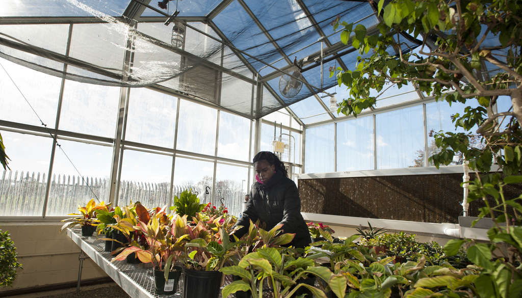 "Senior Emonana Johnson works in the greenhouse during horticulture class at Lincoln High in the Northeast. ""This is what I like. I want to be a professional gardener,"" she says. RON TARVER / Staff Photographer"