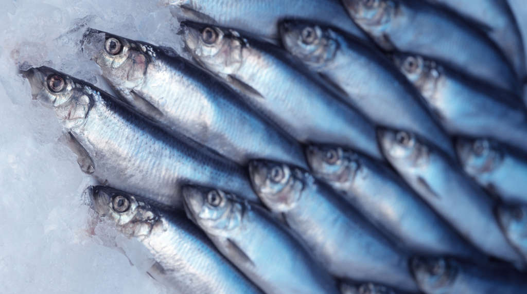 Herring is among fish the Environmental Working Group recommends as low in mercury and high in beneficial fatty acids. The U.S. Environmental Protection Agency and the Food and Drug Administration say women and children should eat more seafood.