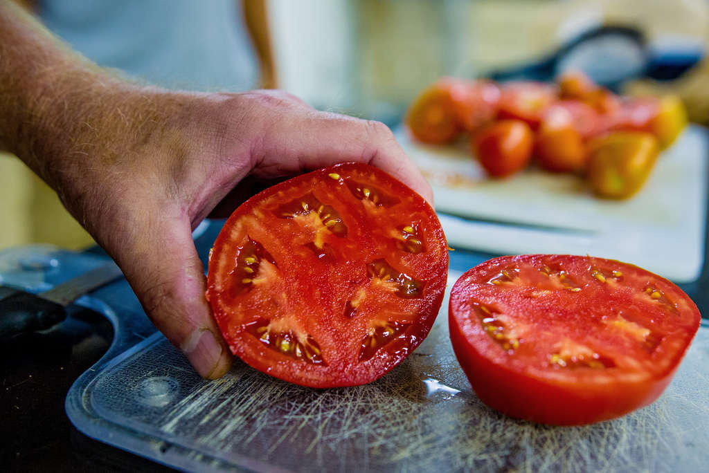 An example of the tomato that is being bred by scientists at Rutgers. JEFF FUSCO / For The Inquirer