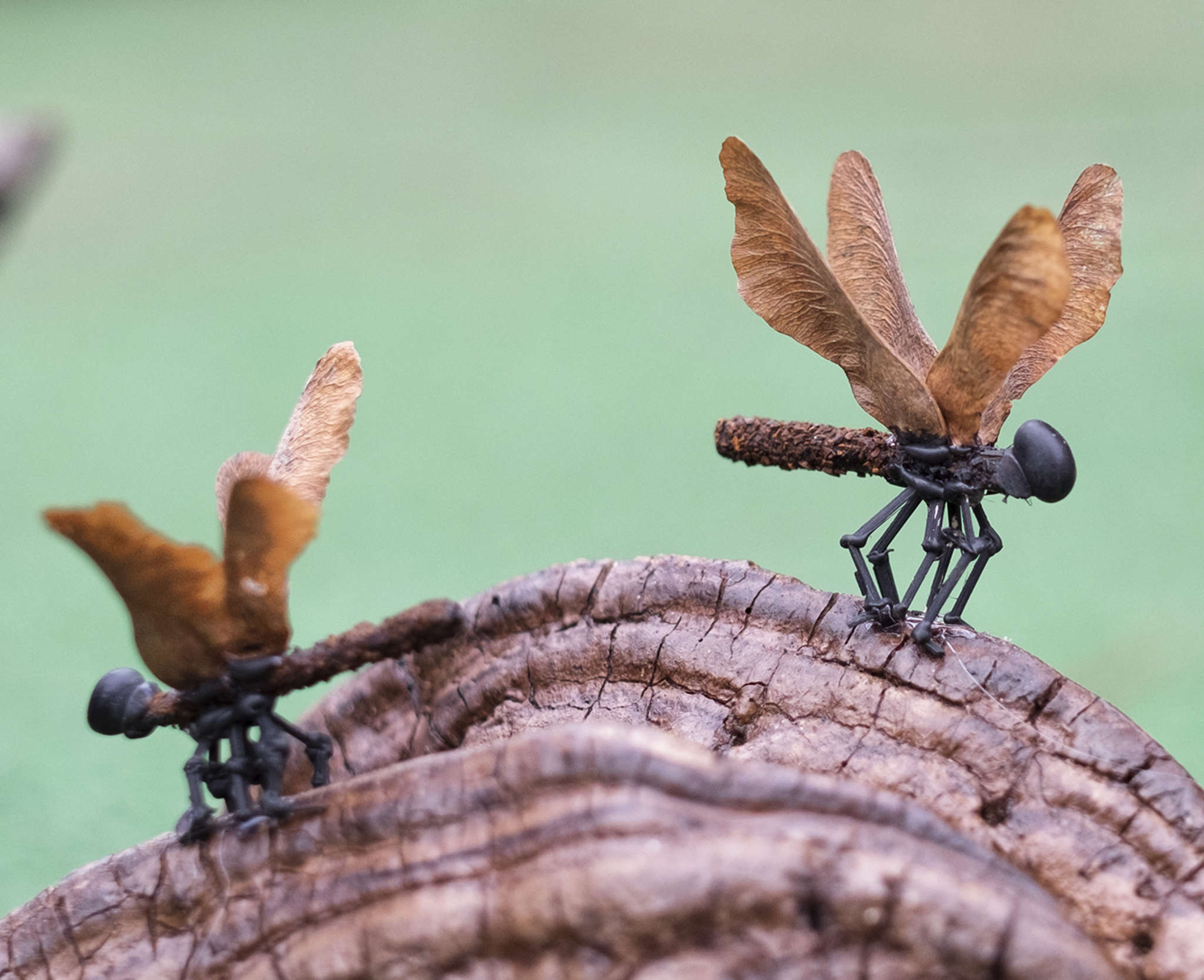 They may look like dragonflies, but are creations from Westcott, using driftwood and bamboo.