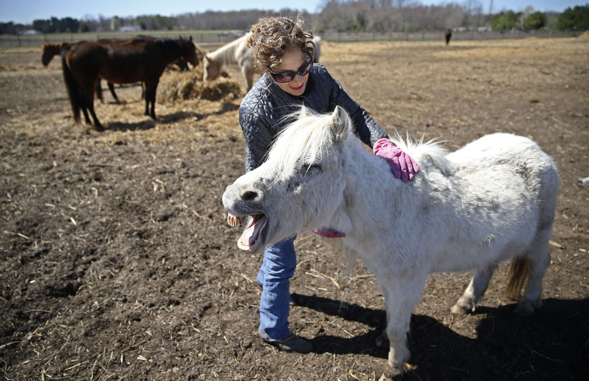 Marshmallow, a Welsh pony, gives out a little laugh as she is stroked by Sarah Rabinowitz Mognoni, who rescued her.