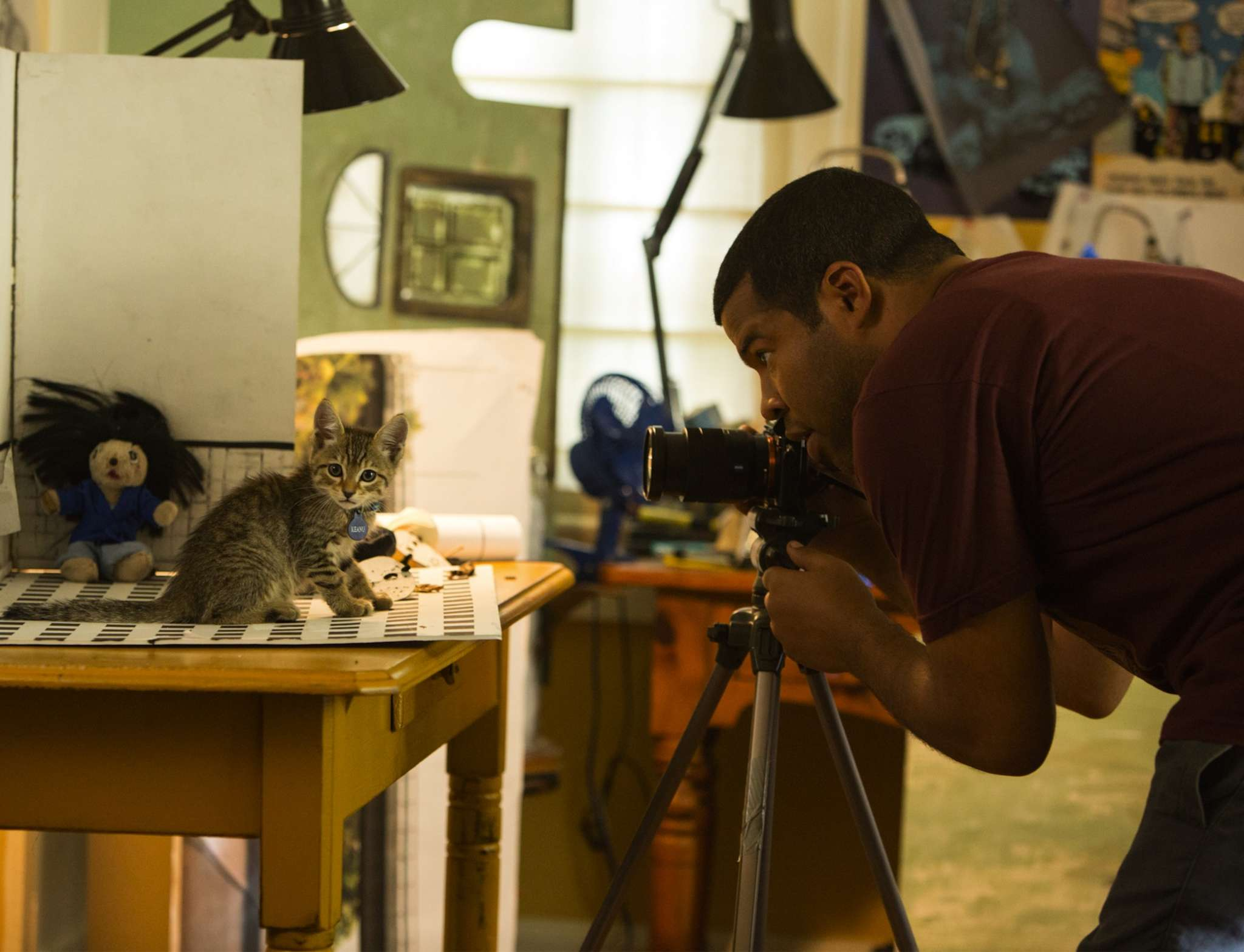 "Jordan Peele in ""Keanu,"" photographing the title character. Peele co-wrote the comedy with ""Key & Peele"" alum Alex Rubens."