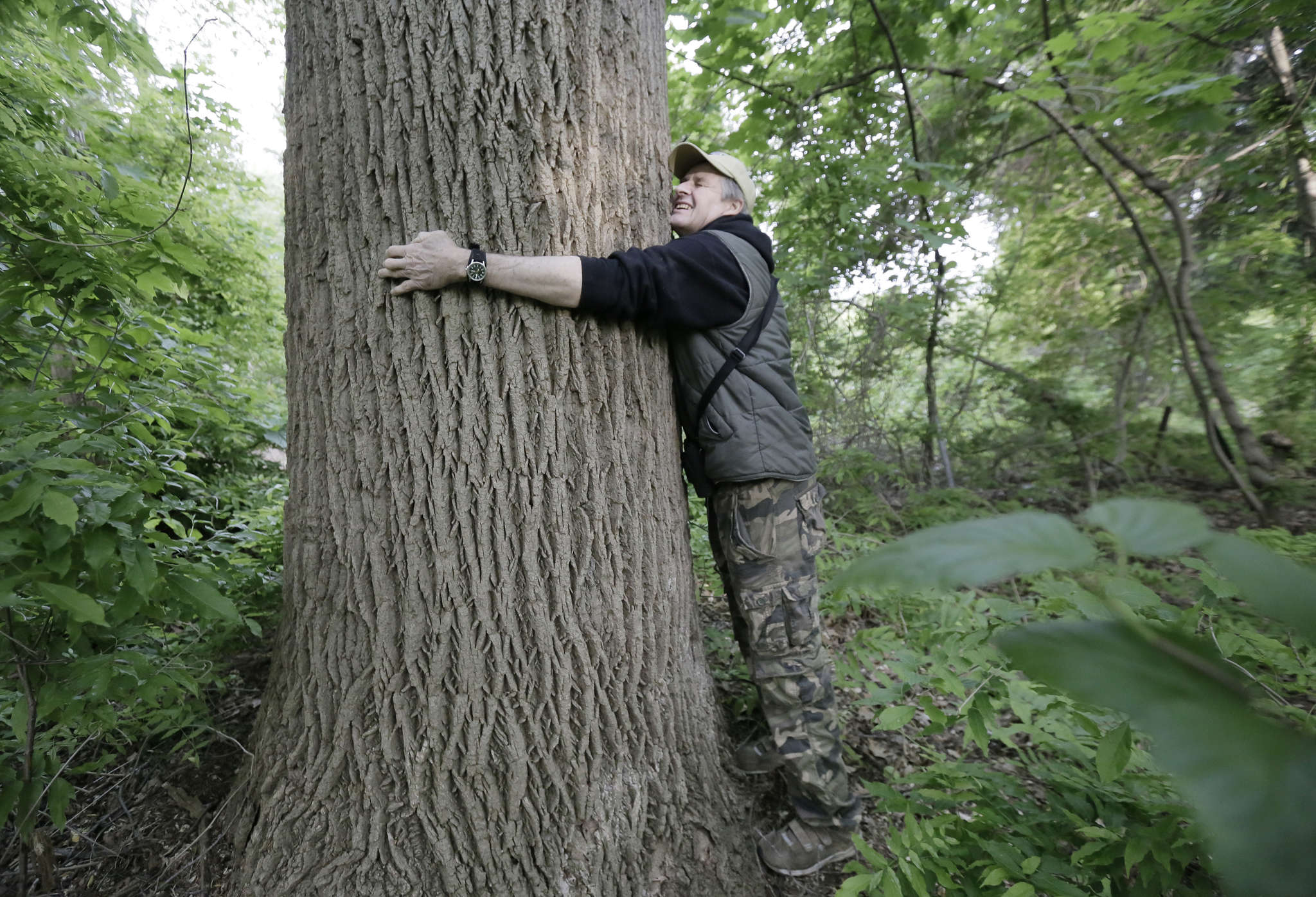 Lloyd B. Shaw of Laurel Springs tries to wrap his arms around a giant tree in Whitman Woods.