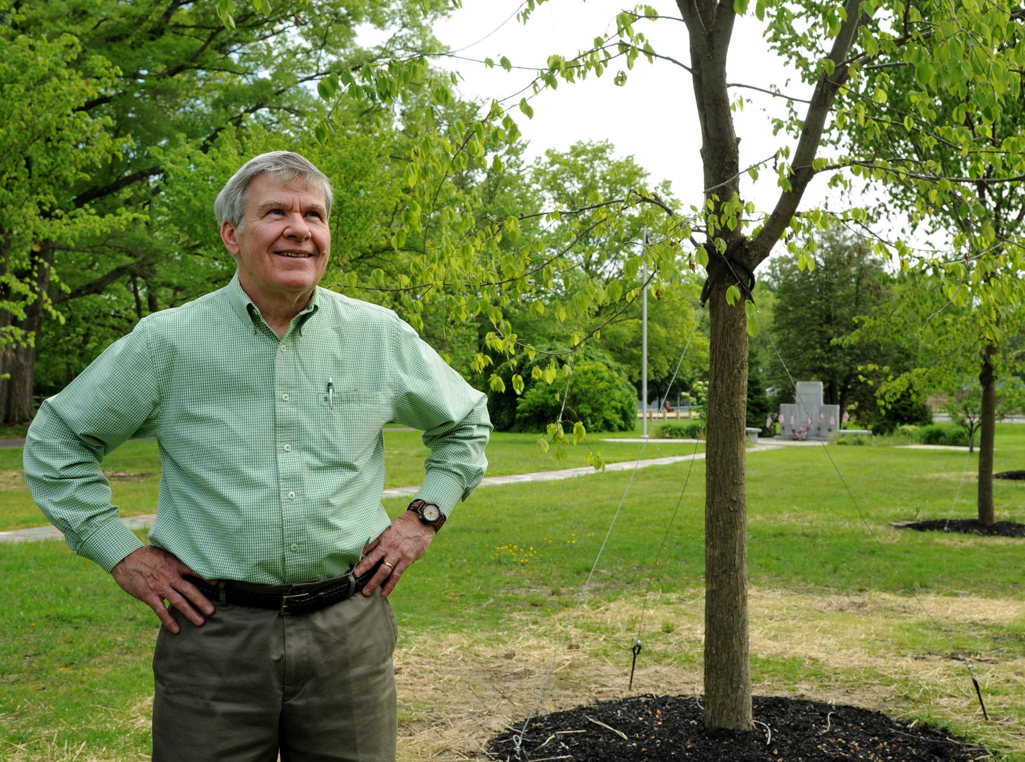 John Gibson, chairman of the Moorestown tree planting and preservation committee, in Memorial Park with newly planted Princeton elms.