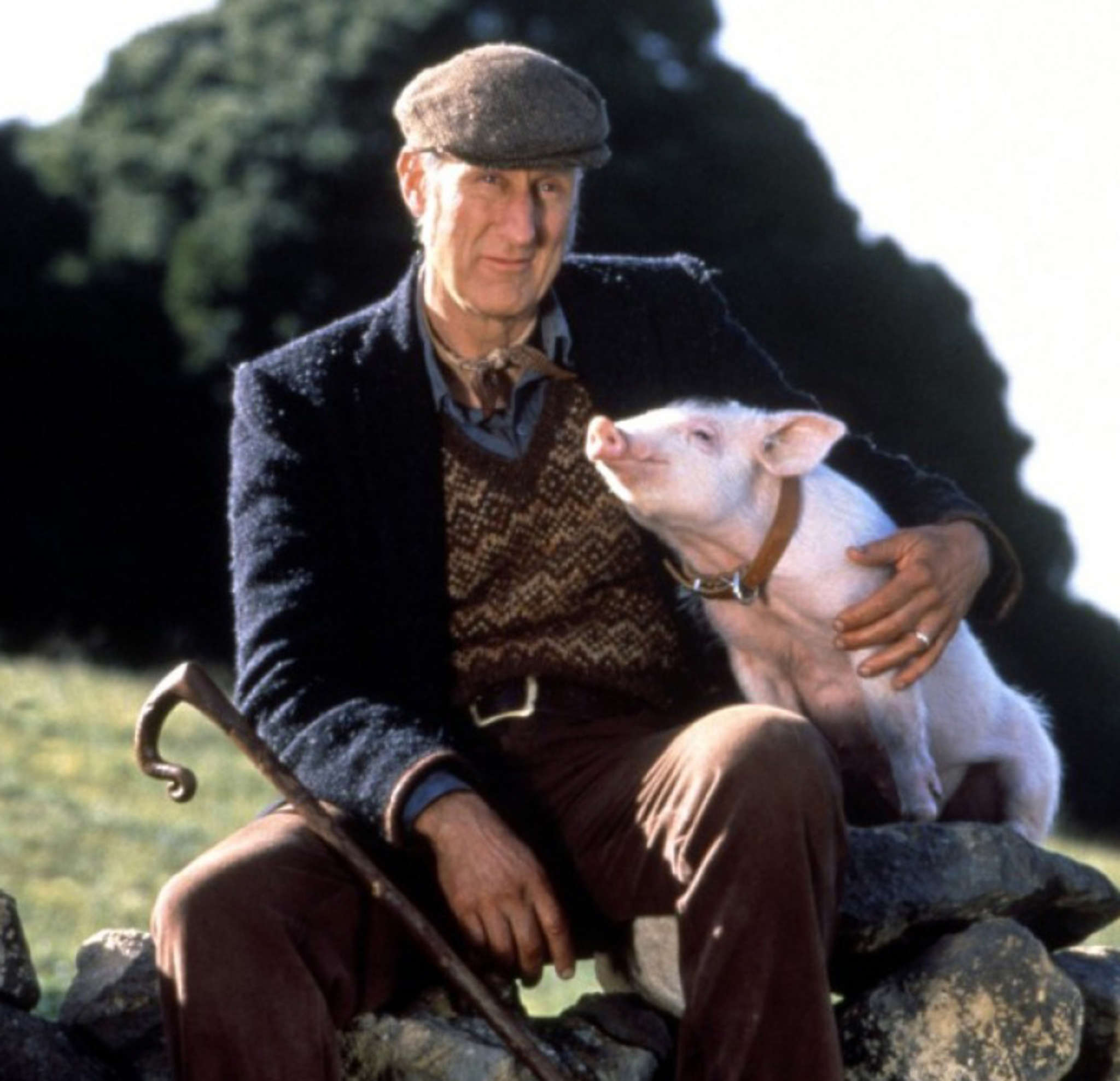 """James Cromwell is the farmer in the charming """"Babe."""""""