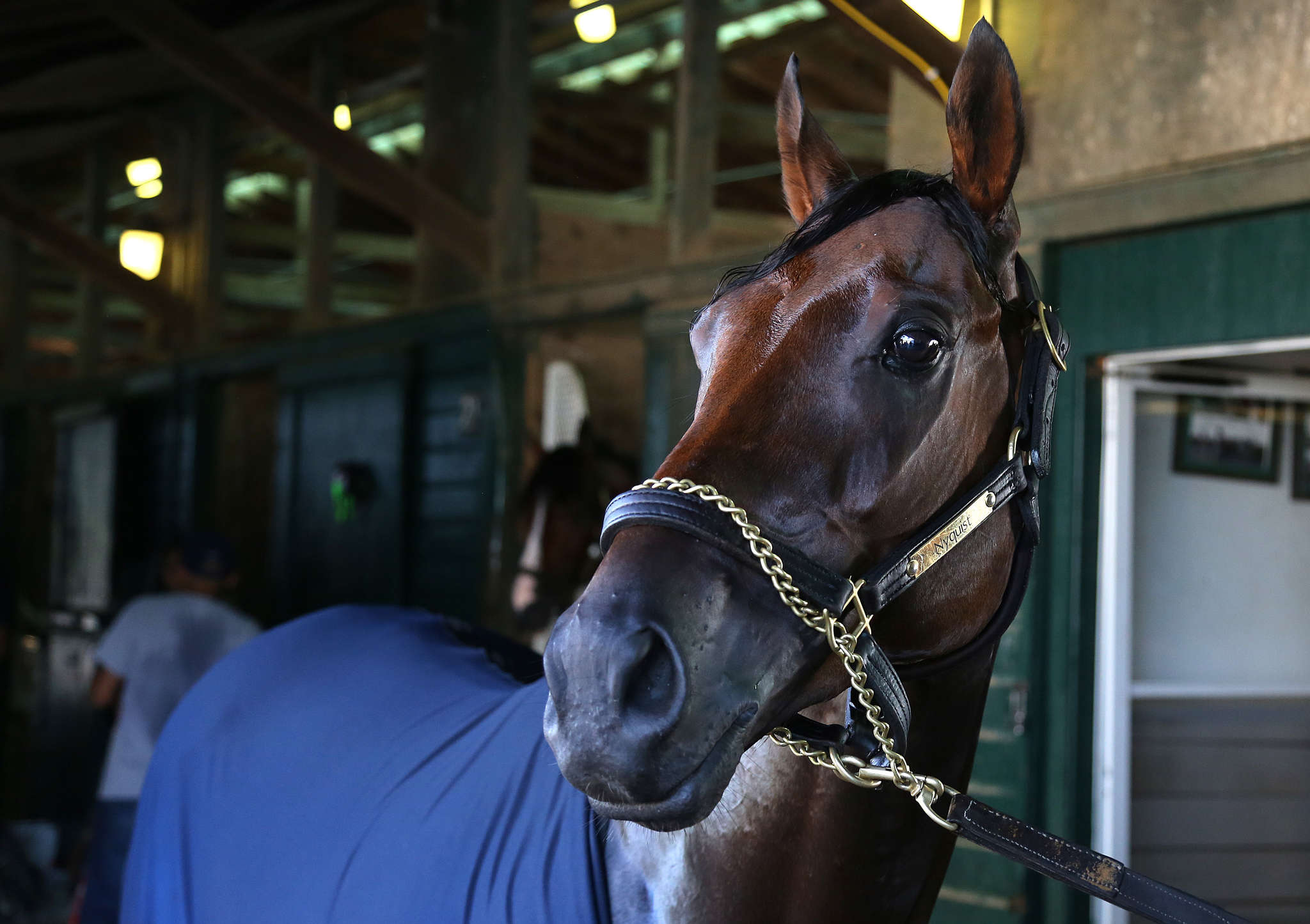 Nyquist rests in barn at Monmouth Park in preparation for for Sunday´s Haskell Invitational. ASSOCIATED PRESS