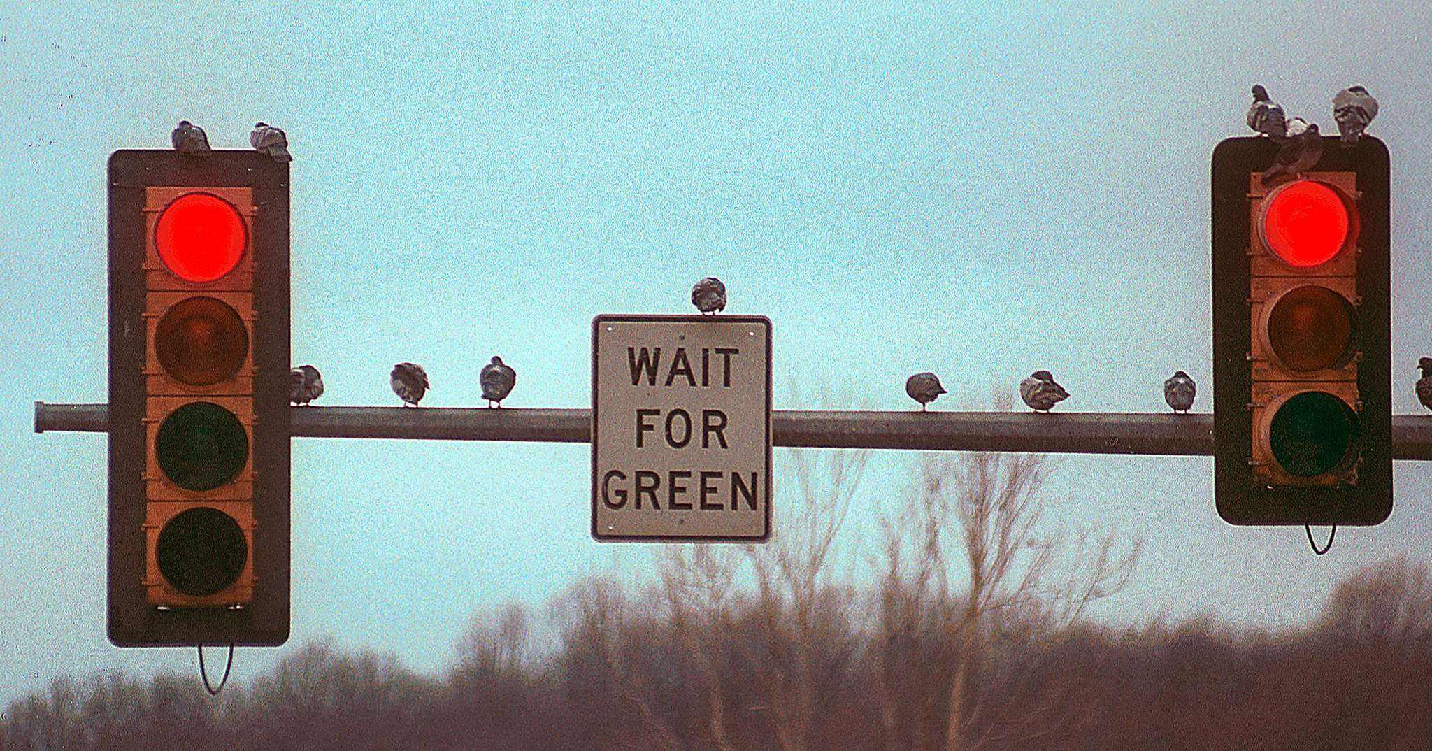 Law-abiding pigeons wait for a light to change in Upper Merion. Motorists, on the other hand, will be getting a break.