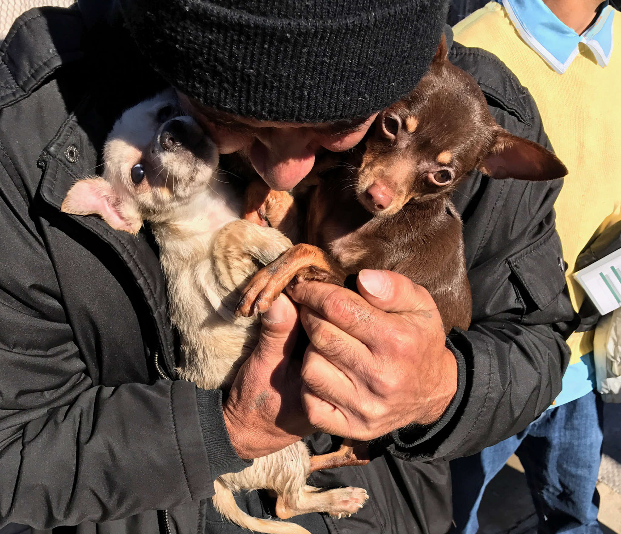 Two of the three dogs that survived a North Philly house fire on Nov. 23.