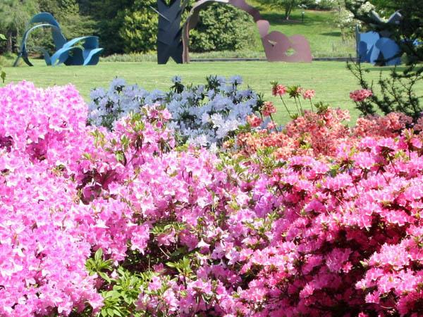 (Photo via Morris Arboretum of the University of Pennsylvania)