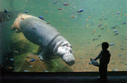 Coming face-to-face with a hippo is pretty cool in Adventure Aquarium´s West Africa River Exhibit. The exhibit was paid for with funds given to the aquarium in the state take-over of Camden in 2002.
