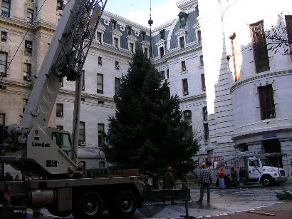 Crews from Fairmount Park, Public Property and Sautter Crane Rental erect City Hall´s Christmas tree yesterday.