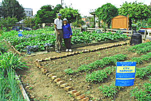 City Harvest grows and distributes naturally-grown vegetables to needy Philadelphians.