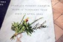 Charles Darwin´s grave (Photo from Westminster Abbey)