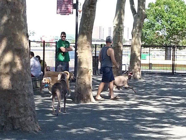 Dogs play in the new dog park located between Delaware Avenue and the river at Market Street. (PlanPhilly)