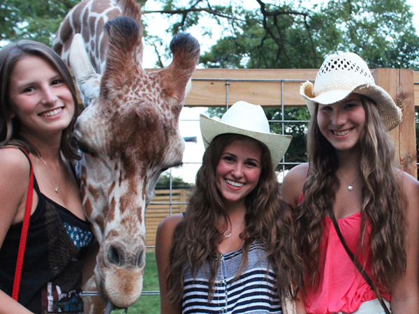 The giraffes were having fun too at last year´s Country Fest. (Courtesy of Elmwood Park Zoo)