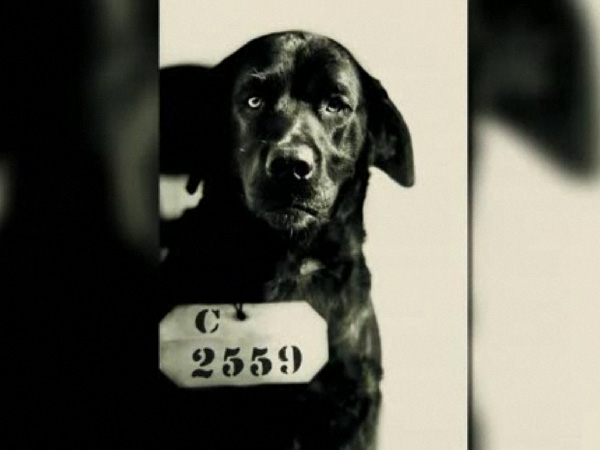 eastern state penitentiary hosts prison pet exhibition