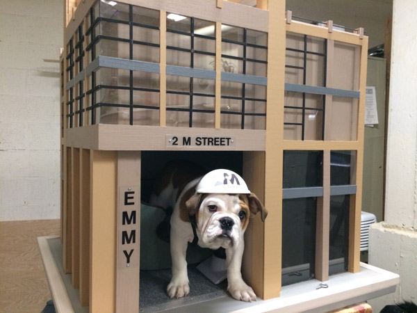 2M Apartments, a new apartment building in Washington, D.C., staff is offering tenants an unconventional perk: a furry little friend.