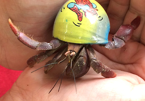What are hermit crab facts for kids?