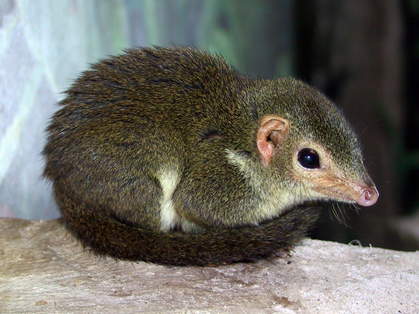 New Shrew Has Cool Name Cooler Spine