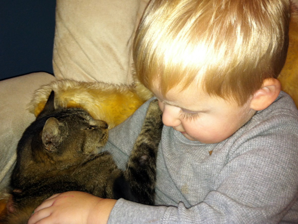 In this photo provided by Lindsay O´Neill is her son Liam, 3, with Sammie at the family´s home in Racine, Wis., after the family was reunited with their gray tabby that ran off five years ago. According to the Wisconsin Humane Society, a woman had seen the cat around her Racine home for several months and began to worry when the weather turned cold. So she brought the cat in and officials found he had a microchip registered to Lindsay O´Neill. (AP Photo/Lindsay O´Neill)