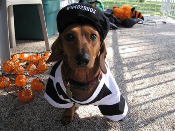 The voting period has official begun for our &acute;Dressed up Pets&acute; Halloween photo contest. <br />