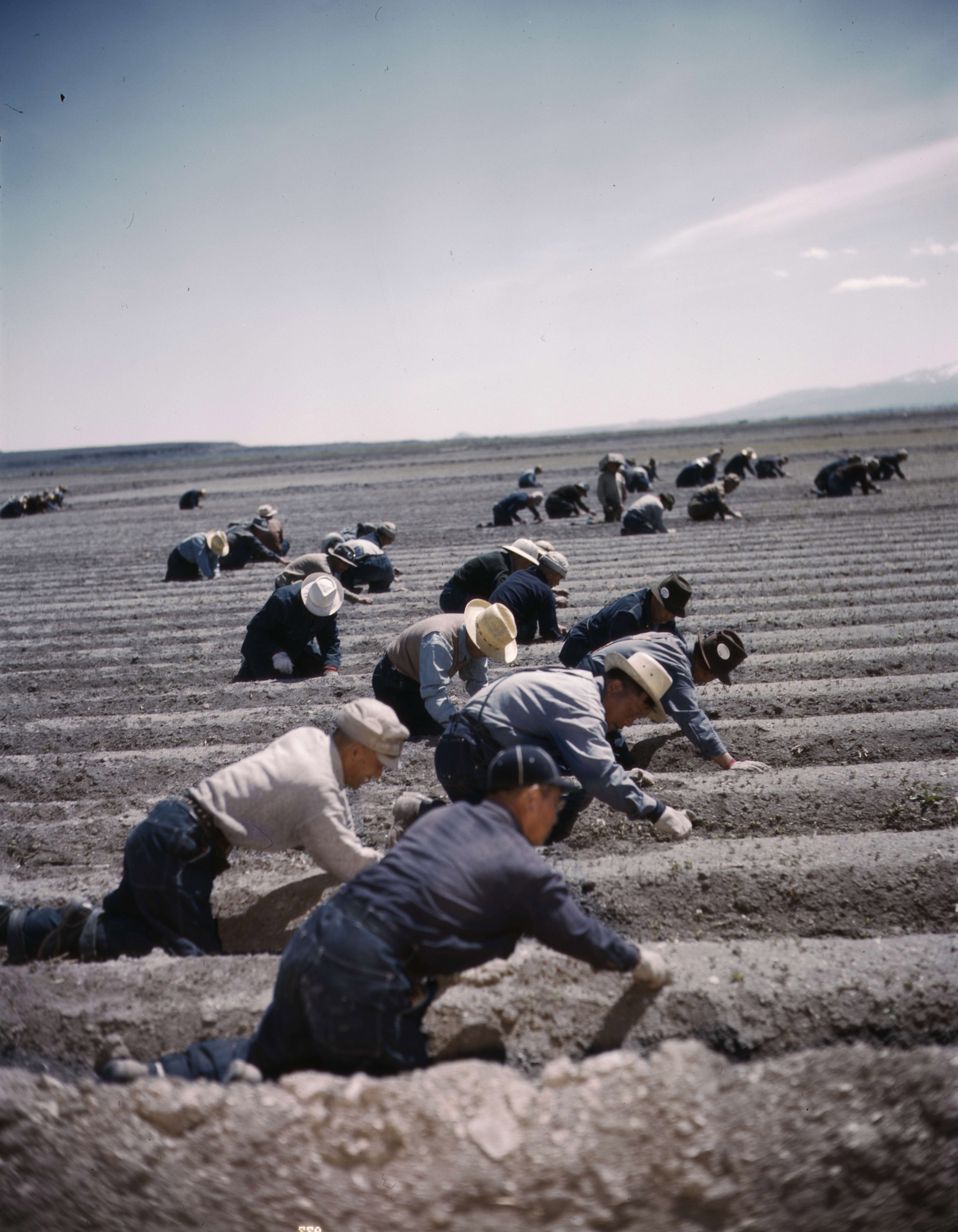 a discussion on the relocation centres of japanese americans