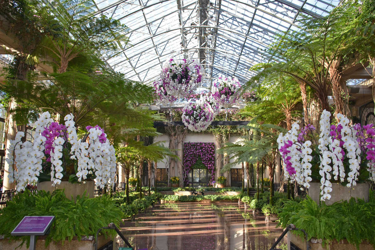 The Orchid Extravaganza in the in the Exhibition Hall at Longwood Gardens, 2015.