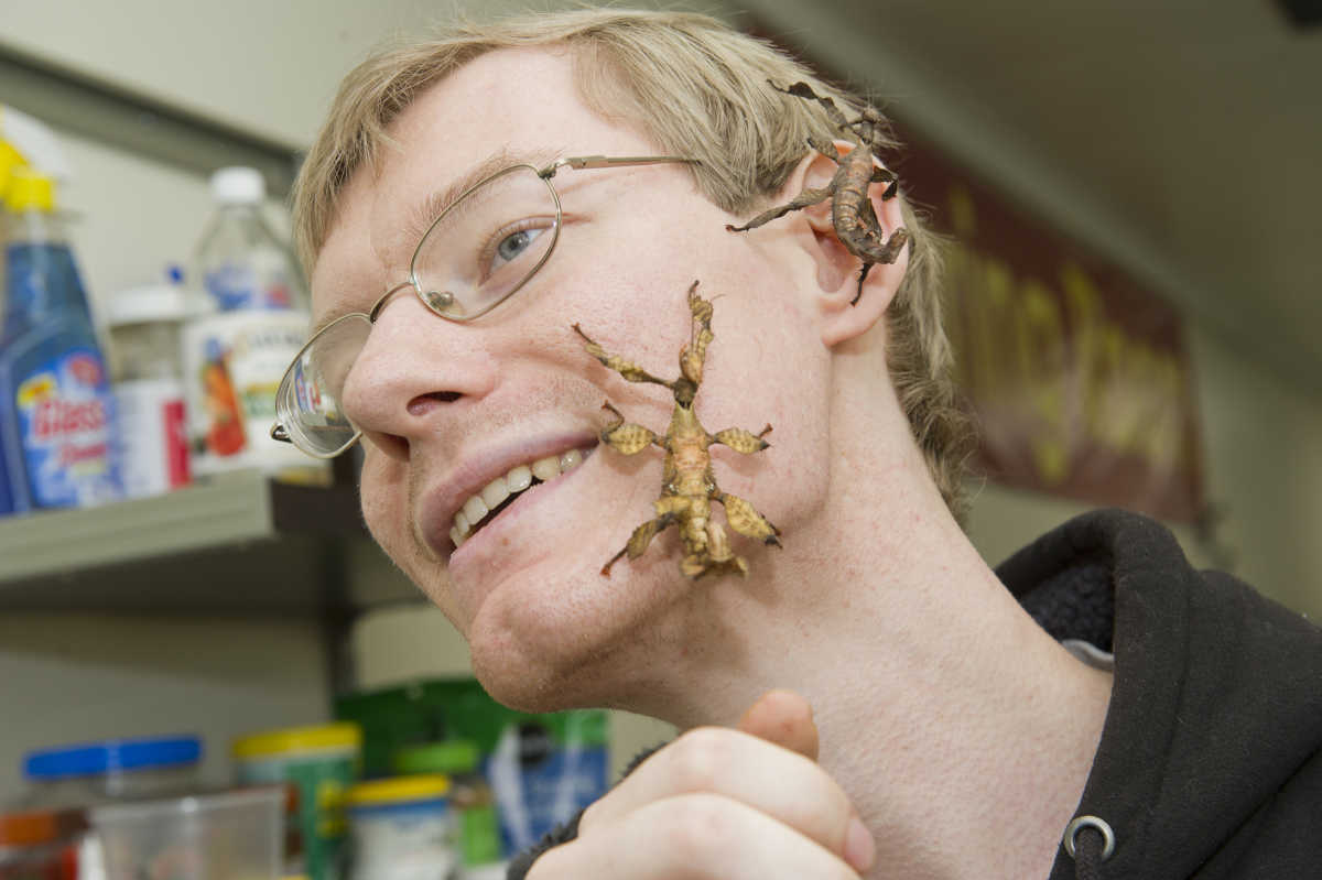 February 20, 2017 -- Not afraid of creepy crawlers Philadelphia Insectarium and Butterfly Pavilion Living Colonies Director Wlodek Lapkiewicz lets both male and female Australian Stick Insects explore his face.  The bugs are one of the new species on exhibit there in North East Philadelphia  Avi Steinhardt / For the Philadelphia Inquirer