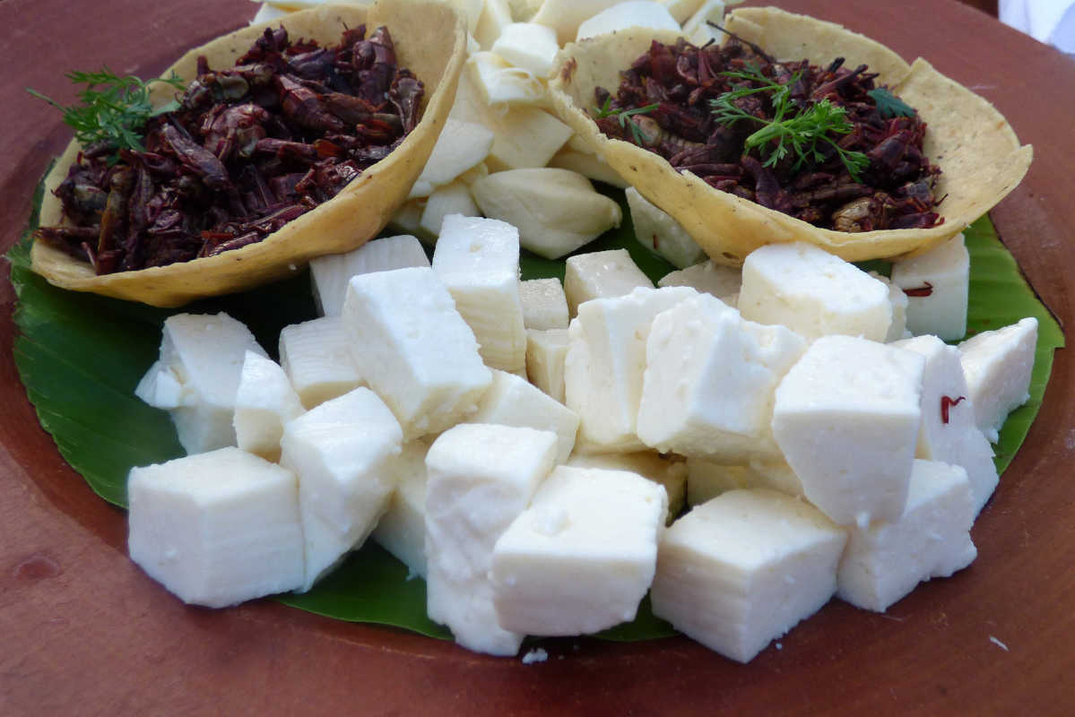 Try roasted chapulines (grasshoppers) served as an appetizer at a rooftop bar in the City of Oaxaca.