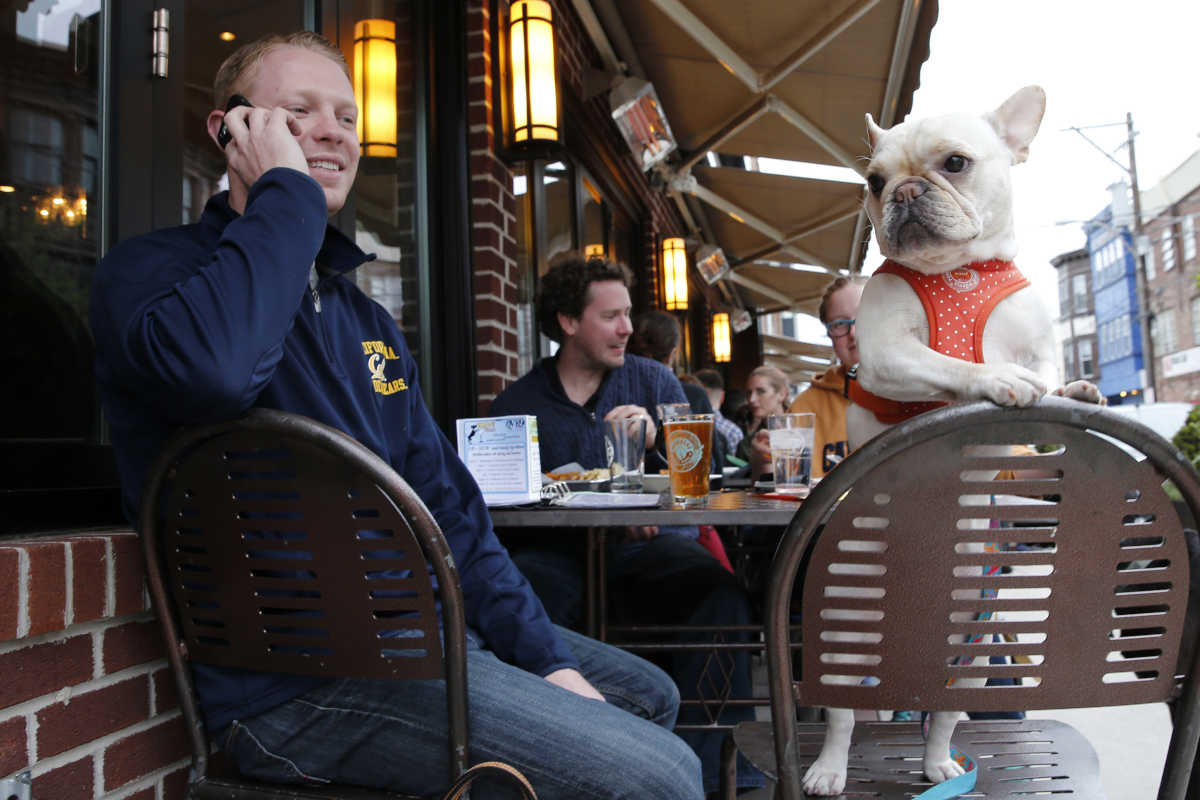 Alex Landis talks on his cell phone while Tootsie the French bulldog stands on her chair during Yappy Hour, a dog-themed happy hour, with their owners, at the Bainbridge Street Barrel House.