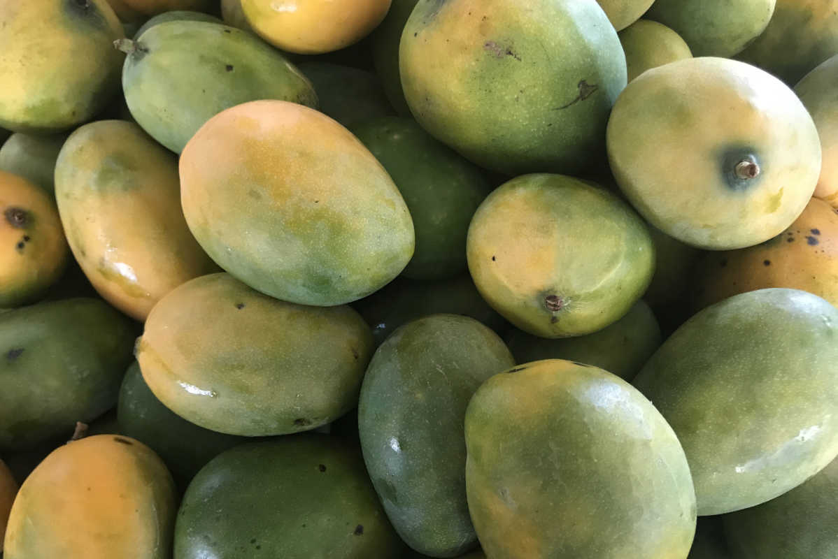 how to cut a mango with seed