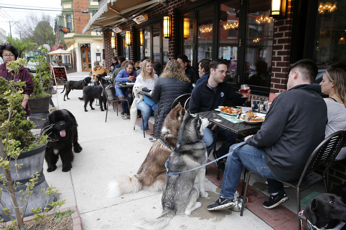 Dogs and their owners during Yappy Hour, a dog themed happy hour outside the Bainbridge Street Barrel House.
