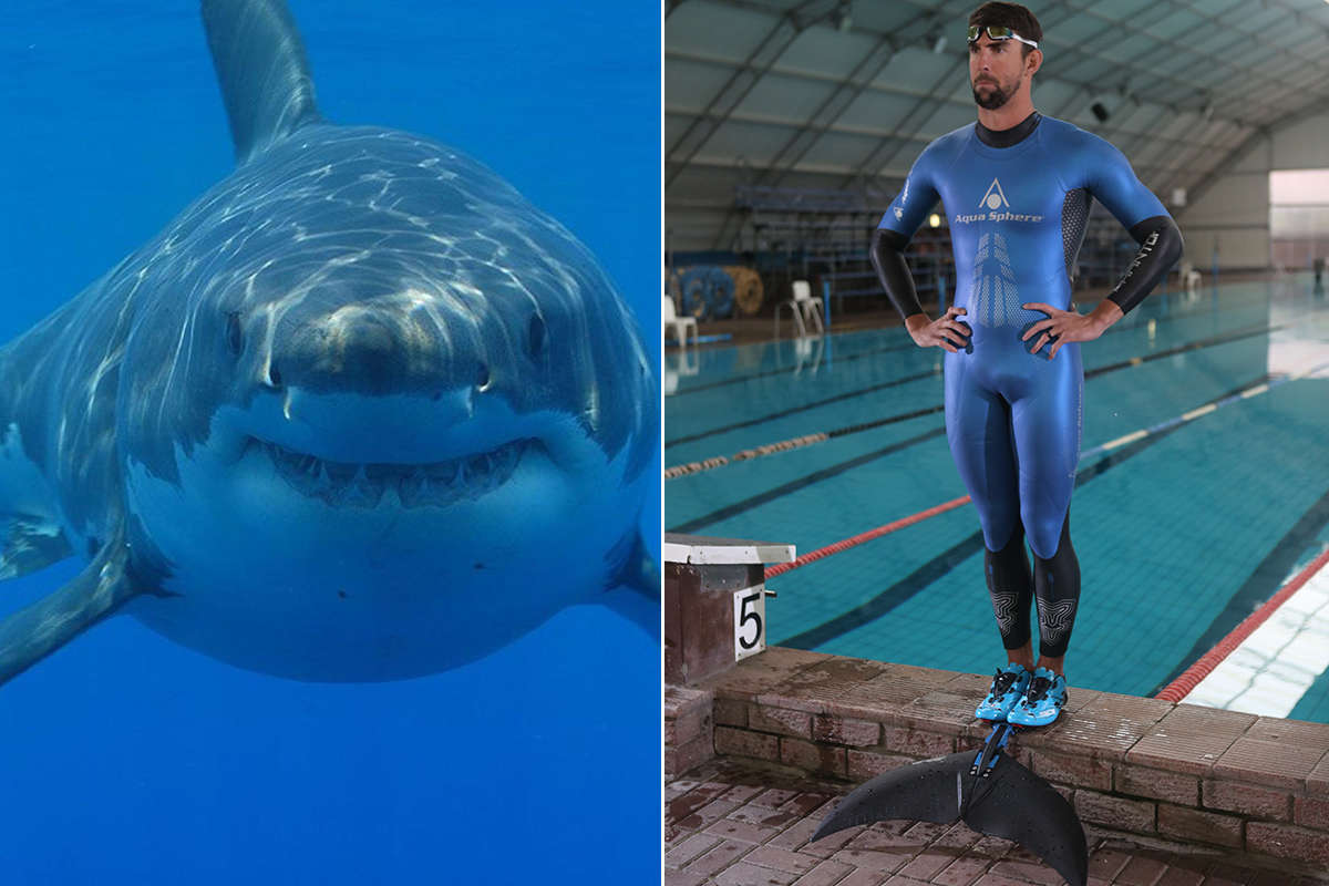 Michael Phelps lost to a simulated shark in a race on Sunday night.