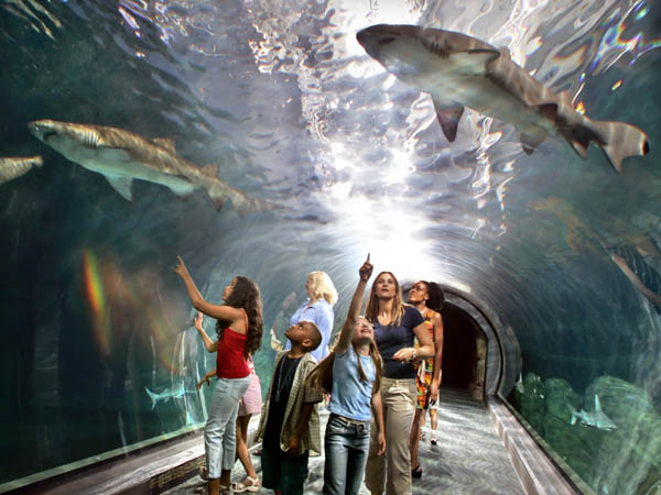 Take A Bite Out Of Shark Week At Adventure Aquarium
