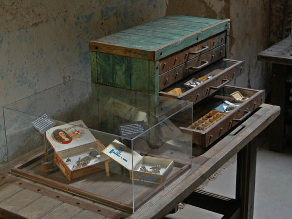 Greg Cowper´s Specimen features rare species of moths and butterflies found inside the exercise yard of the penitentiary.  (Photo courtesy of Eastern State Penitentiary)