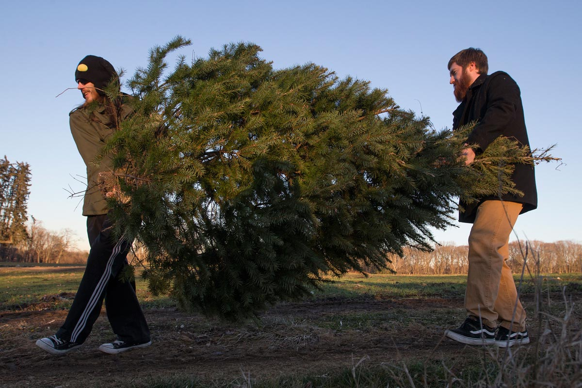 How to recycle your Christmas tree in Philly