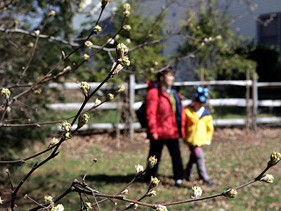 That dreaded harbinger of spring, allergy season, has arrived. Time to consider how to provide your kids with relief. (AP Photo/Mel Evans)