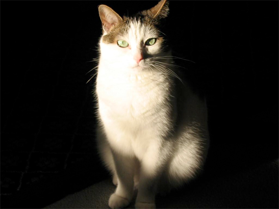 Allie Kat is sitting in a sunbeam in our living room, slowly opening and closing her to me.  If you listen very carefully, you can hear her purr.