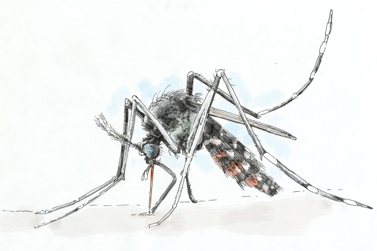 Calendar Illustration Job : Buzz on zika montco officials see threat philly
