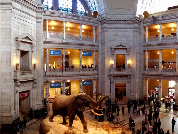 The American Museum of Natural History (Blake Patterson/Flickr Creative Commons)