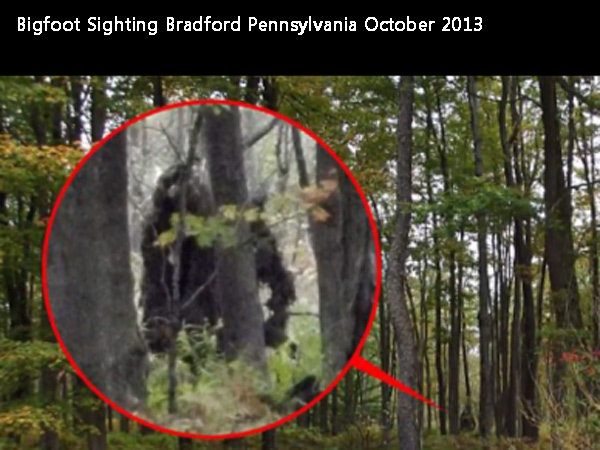 Photos of a Bigfoot or two? Or a tree stump or uprooted rootball? This photo was taken in October 2013 by a man who stopped his car in a state park in Bradford, Pa.