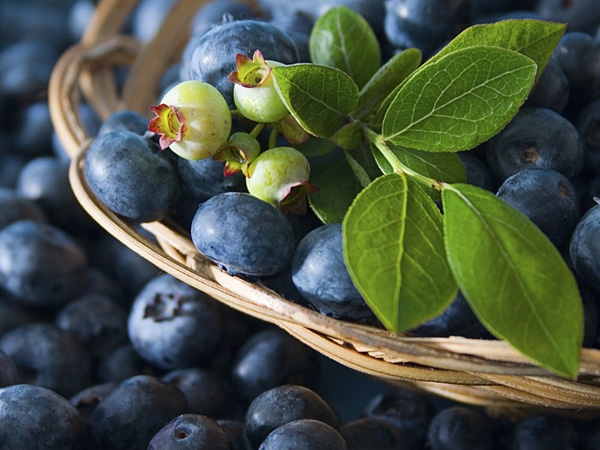 Peddler´s Village celebrates all things blueberry this weekend.  (Courtesy of iStock)