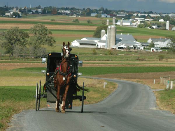 A horse and buggy travels along a Lancaster County back country road that twists among acres and acres of picture-perfect farmland. (Photo courtesy of www.padutchcountry.com / Terry Ross)