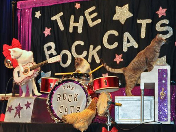 The musical Rock-Cats!