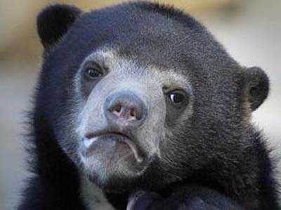 """This is the photo used for the popular """"Confession Bear"""" meme. Users write confessional text over the picture and post the result to Reddit."""