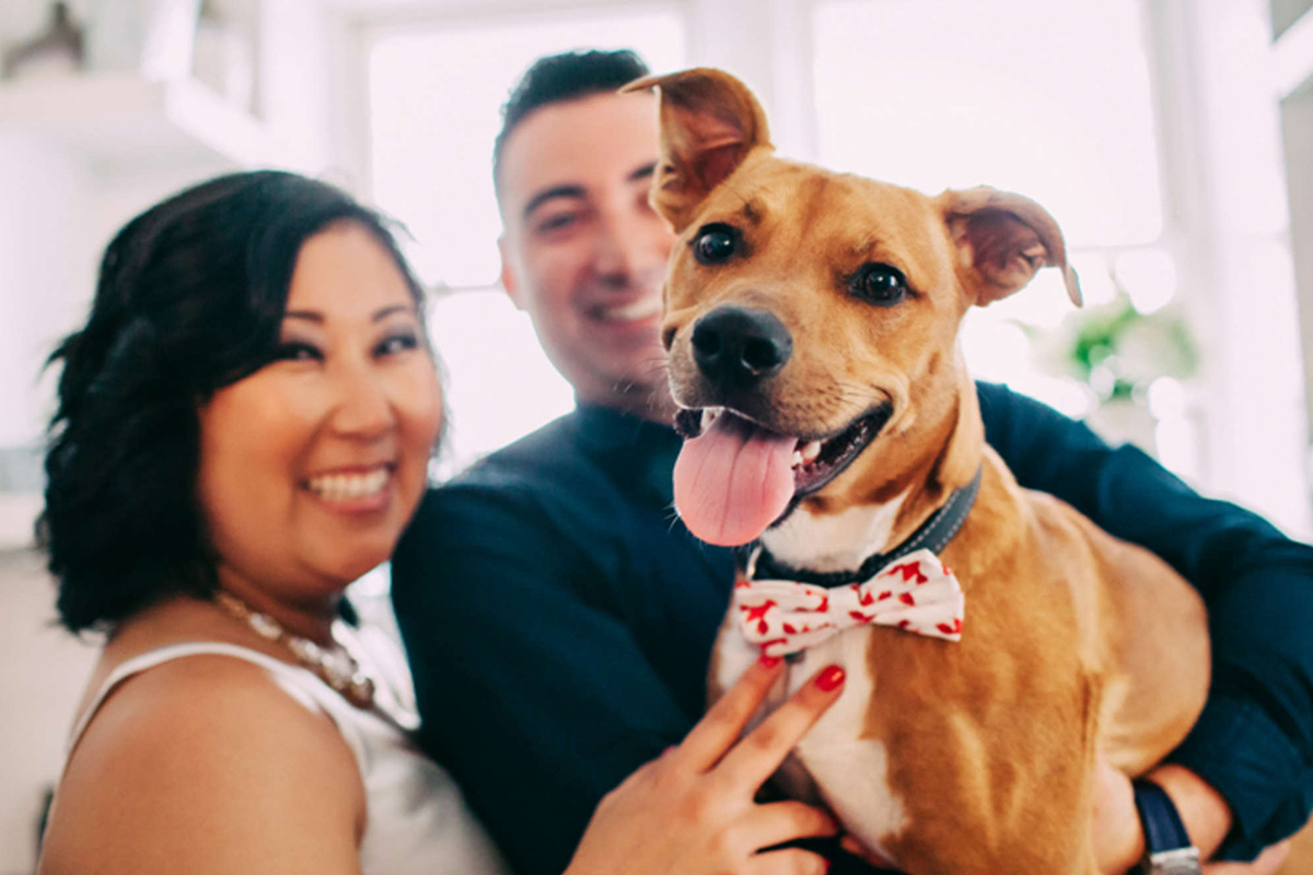 Couples want their pets in their weddings and doggone it vendors